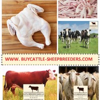 www.buycattle-sheepbreeders.com